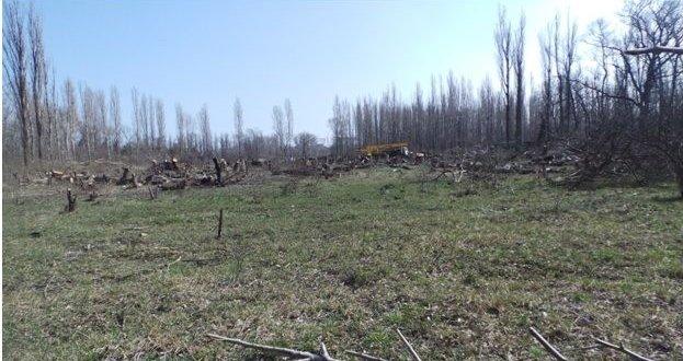 Место массовой вырубки деревьев
