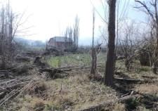 Западная окраина: много сваленных деревьев