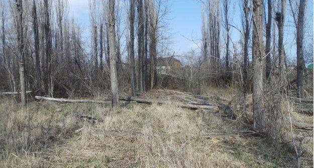 Лес редеет в площади и в количестве деревьев